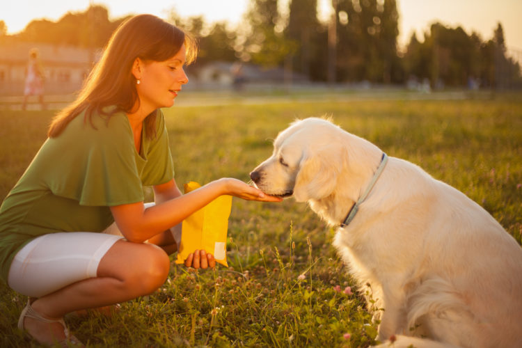 Why Bones & Baths Pet Care Has the Best Dog Grooming in Grapevine